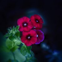 цветочное созвездие :: gribushko грибушко Николай
