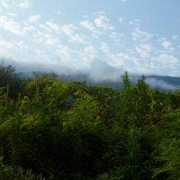 Утро в Абхазии :: Игорь Юсов