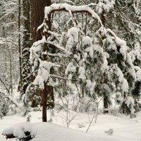 Во власти холода и снега :: Милешкин Владимир Алексеевич