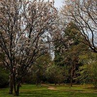 Весна :: Alexander Andronik