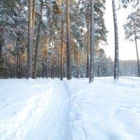 Зимнее утро :: Валерий Струк