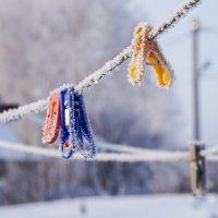 Остались зимовать. :: Наталья ***