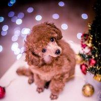 новогоднего настроения :: Катерина Терновая