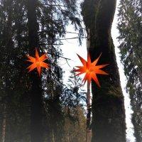 волшебный лес :: kuta75 оля оля