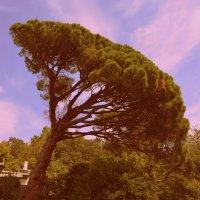 падующее дерево :: руслан морквин