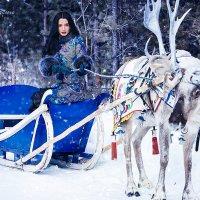 Пока Санта Клаус не видит..)) :: Фотостудия Объективность