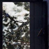 Выгляни за дверь... :: Игорь Суханов