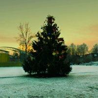 новогодняя ёлка :: Сергей Кочнев