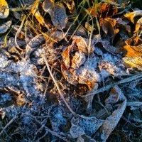 Морозное дыхание :: Татьяна Тимофеева