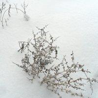 Травиночки,былиночки... :: Наталья