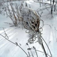 И к нам пришла зима... :: Наталья