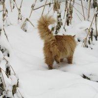 Кот на прогулке :: наталия