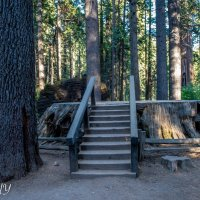 The Big Trees Park, California :: Leonid