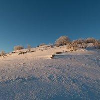 Снежная пустыня :: Ксения Репина