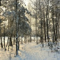 В лесу перед Рождеством :: Милешкин Владимир Алексеевич