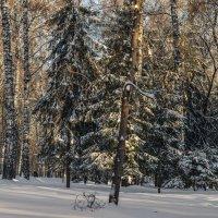 Краски зимнего леса :: cfysx