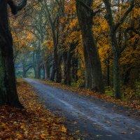 Облетает листва, тают краски осеннего леса, :: Юрий. Шмаков
