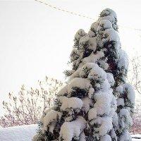 одесская зима :: Александр Корчемный