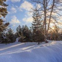 зимнее солнышко :: Виктор Ковчин