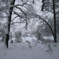 Зимний лес :: Юрий Колчин