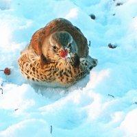 Холодно и голодно !!! :: Александр Запылёнов