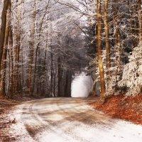 Зимняя :: Anna Minevich