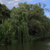 пруд новодевичий монастырь :: andrew585 585
