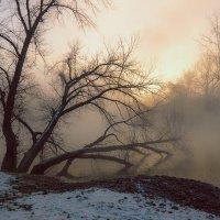 Туман :: Ирина Лядова