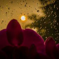 дождь за окном :: Игорь Самородин