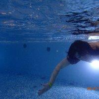 А дельфины здесь плавают? :: ElenaS S