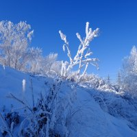 Зимним солнечным днём... :: Rafael