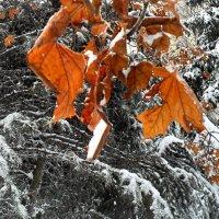 Осенние сполохи! :: Наталья