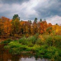 Пришла осень в Брянский лес :: Александр Березуцкий (nevant60)