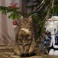 Охрана Деда Мороза всегда начеку! :: Andrey Shch.