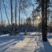 Мороз и Солнце 3 :: Андрей Дворников