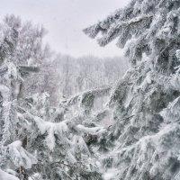 пушистая зима))) :: Юлия Коноваленко (Останина)