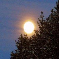 Луна - ночное маленькое солнце... :: Галина Полина