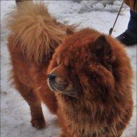 Миша холода не боится! :: Нина Корешкова