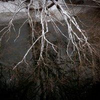 Костлявые руки холода :: Alexander Petrukhin