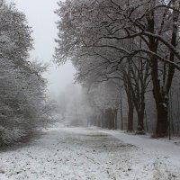 А вокруг белым-бело и снегу намело .. :: Юрий. Шмаков
