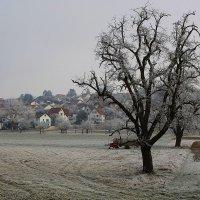 Морозное утро. :: Юрий. Шмаков