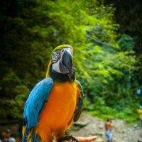 Bird fo black beard :: Сергей Nikon