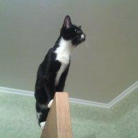 Суета со светом, очень понравилась кошке Фросе! :: Ольга Кривых