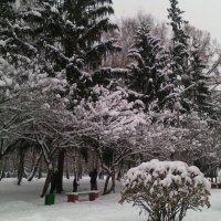 Зимний парк в Коломне. :: Ольга Кривых