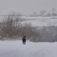 Одинокий путник :: Валерий Талашов