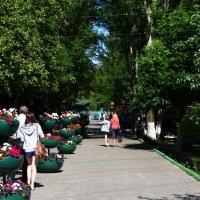 Зоопарк Лимпопо :: lapin_valerei@mail.ru