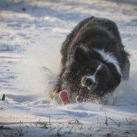Зимние забавы :: Виталий Латышонок