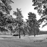 Черно-белая зима :: Сергей F