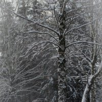 Просто зима.... :: Елена Фролкова