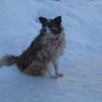 Северные собаки охотно принимают штатив за бур для зимнего лова :: Александра